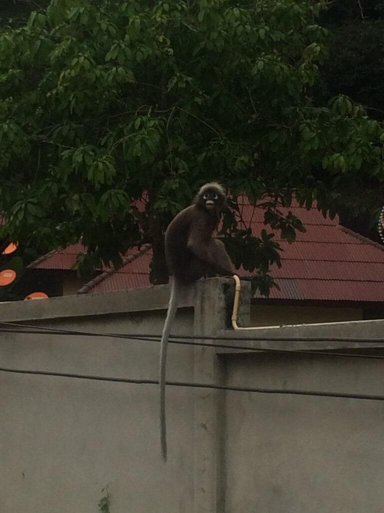 Tonsai, Thailand, Travel, monkey
